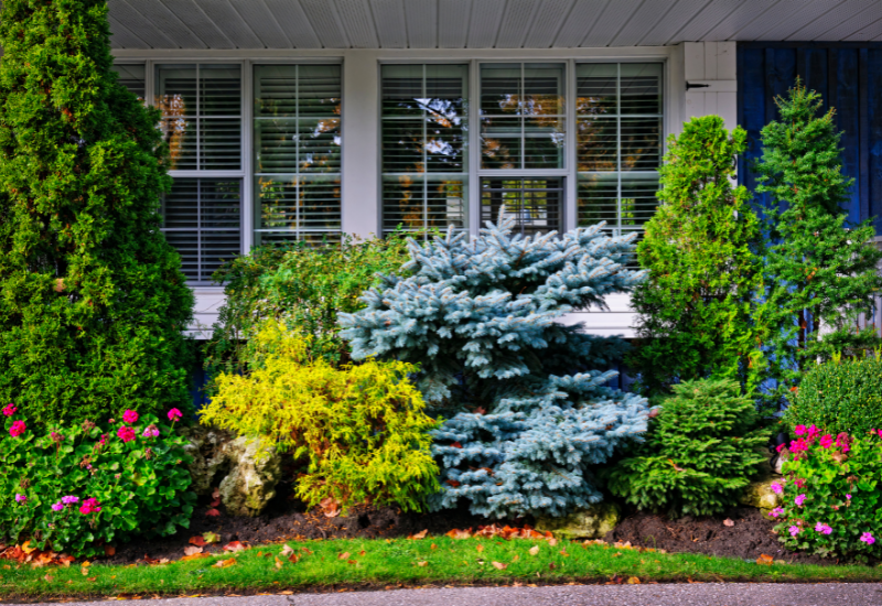 landscaping tips for model homes - native bushes and trees