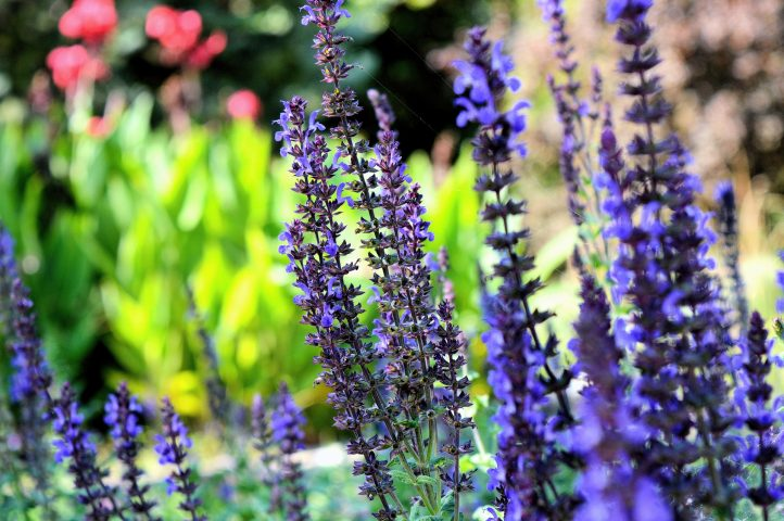 The Best Flowers To Plant for Your Climate - Lavender