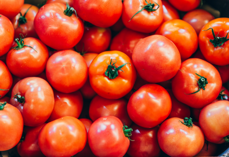 gardening tomatoes